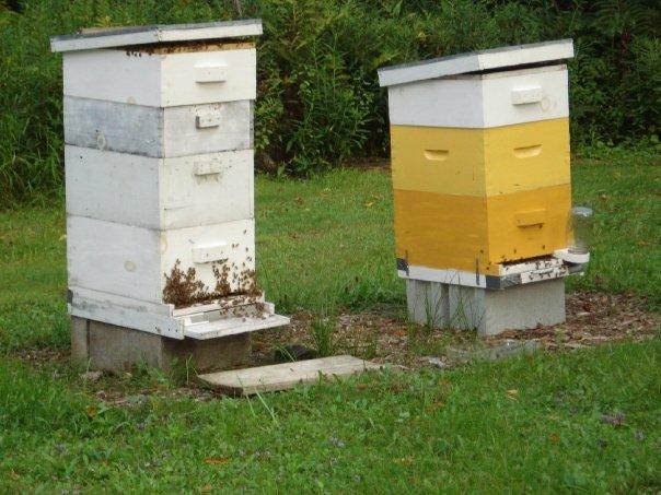 mollys-hives.jpg